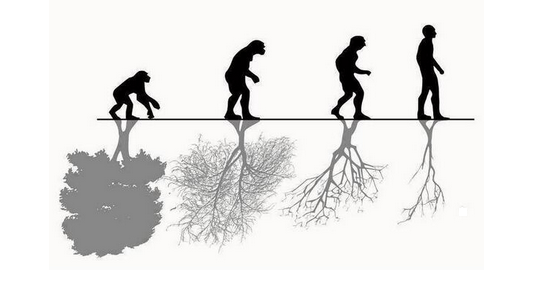 evolucion ecologica
