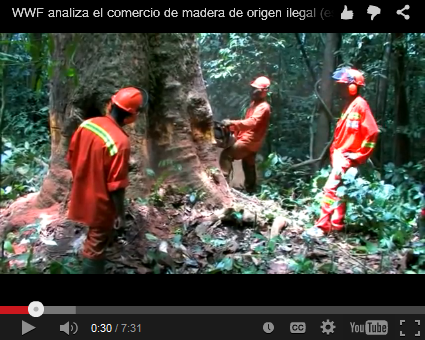 madera_ilegal
