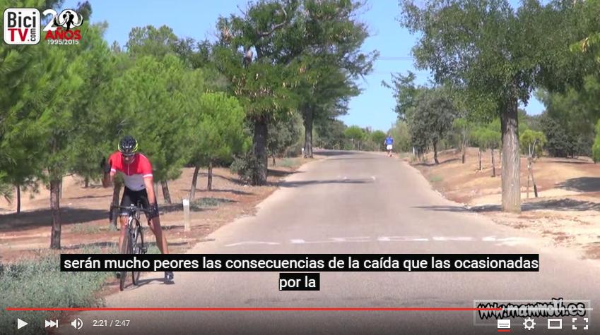 Bicicletas e insectos