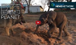 Bebé elefante y su amigo perruno