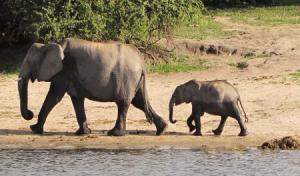 Papel con estiércol de elefantes