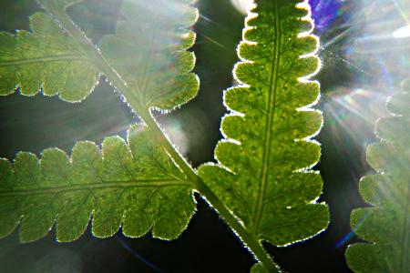 Fotosintesis inversa