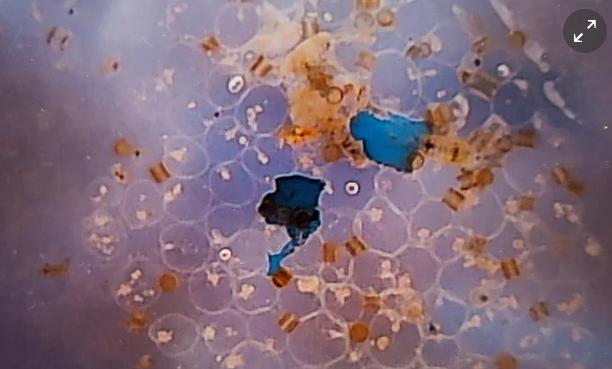 sal y microplasticos