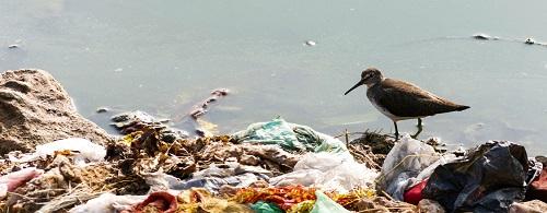 ¿Qué son los bioplásticos?
