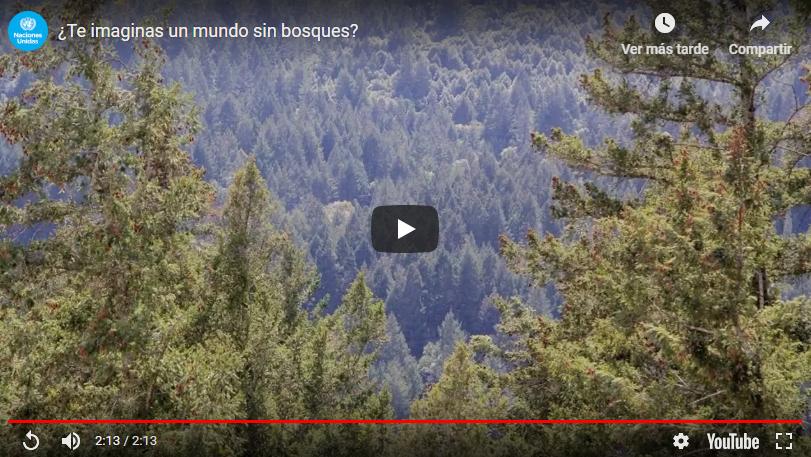 Un mundo sin bosques