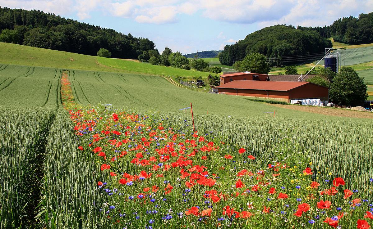 Flores vs. pesticidas