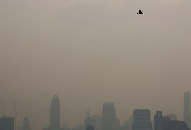 La contaminación mata
